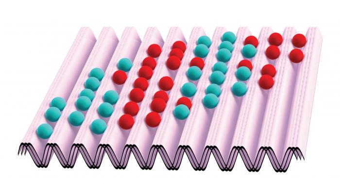 Ferromagnetic domains in a shaken lattice
